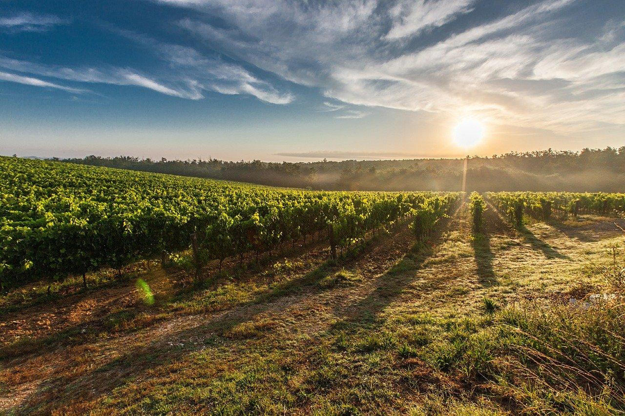 Toskánsko vinárstvo